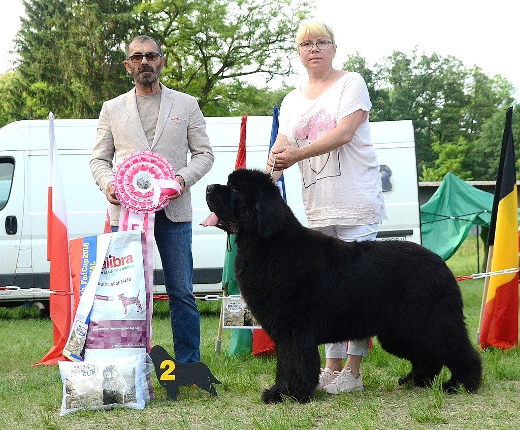 Final-2-nd-place-gch-king-of-helluland-you-are-the-best